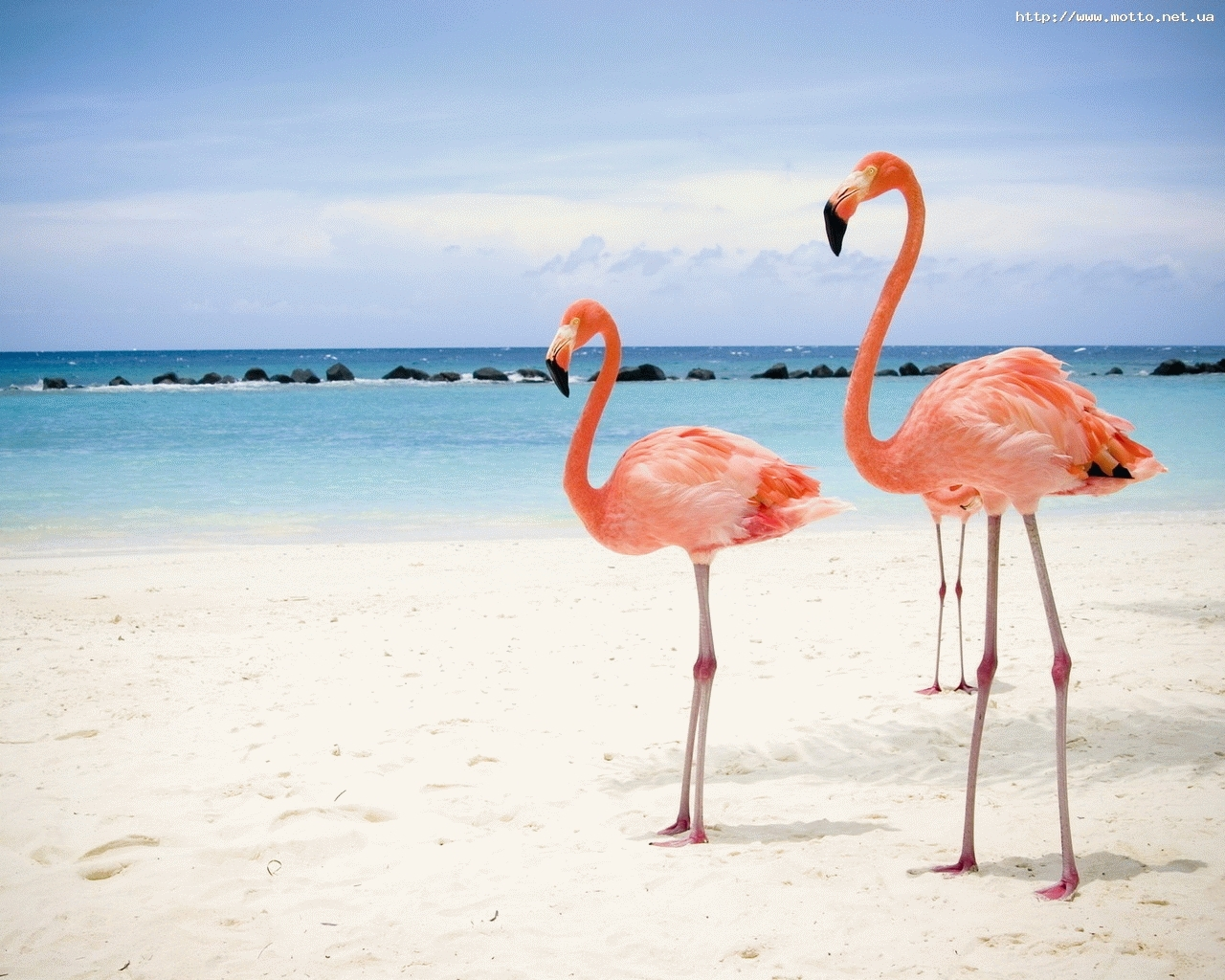 8197 download wallpaper Animals, Birds, Sky, Sea, Beach, Flamingo screensavers and pictures for free