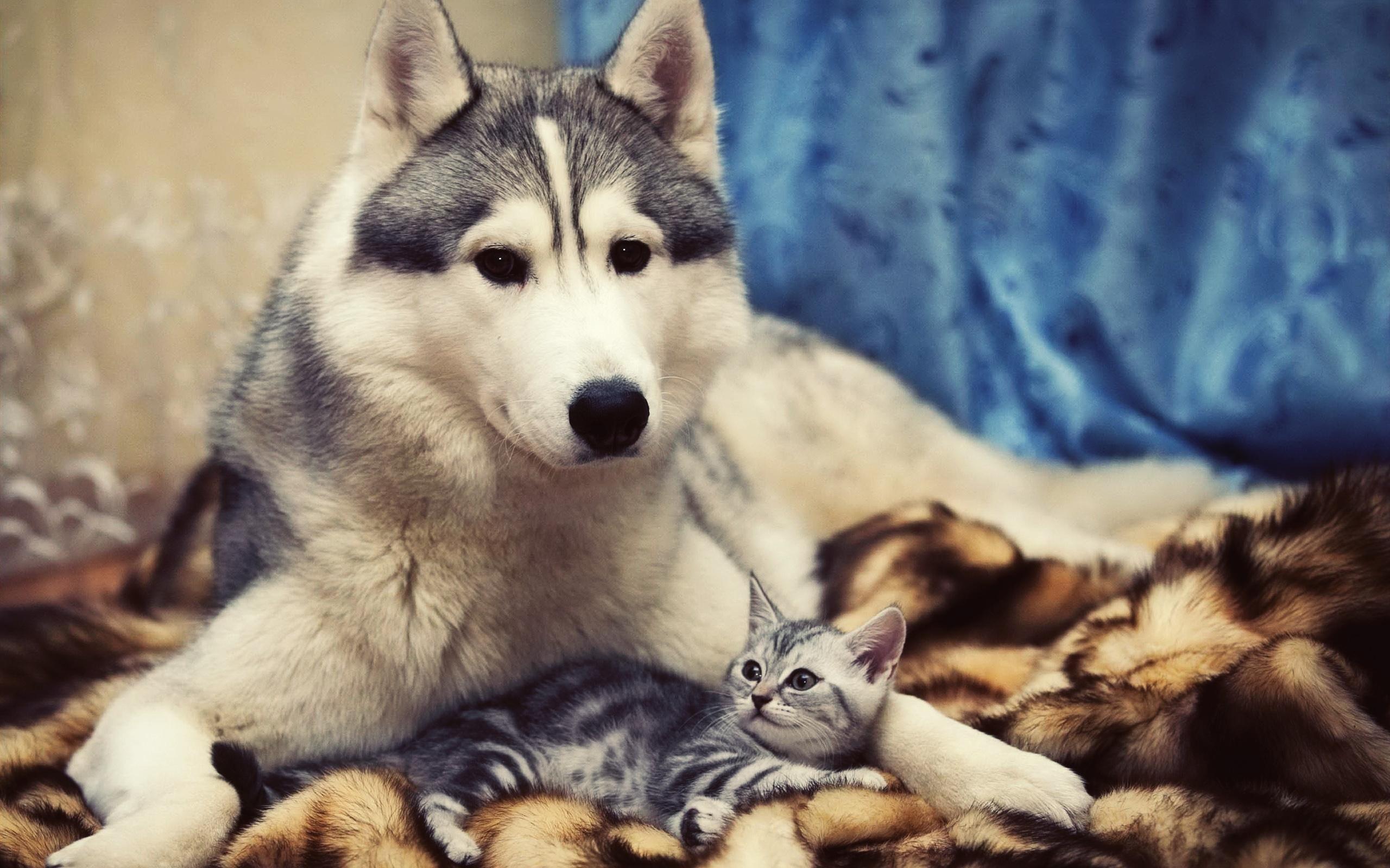 48874 скачать обои Собаки, Кошки (Коты, Котики), Животные - заставки и картинки бесплатно