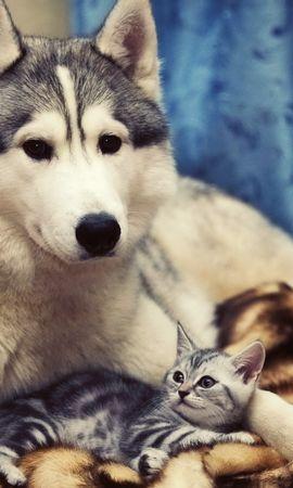 48874 скачать обои Животные, Кошки (Коты, Котики), Собаки - заставки и картинки бесплатно