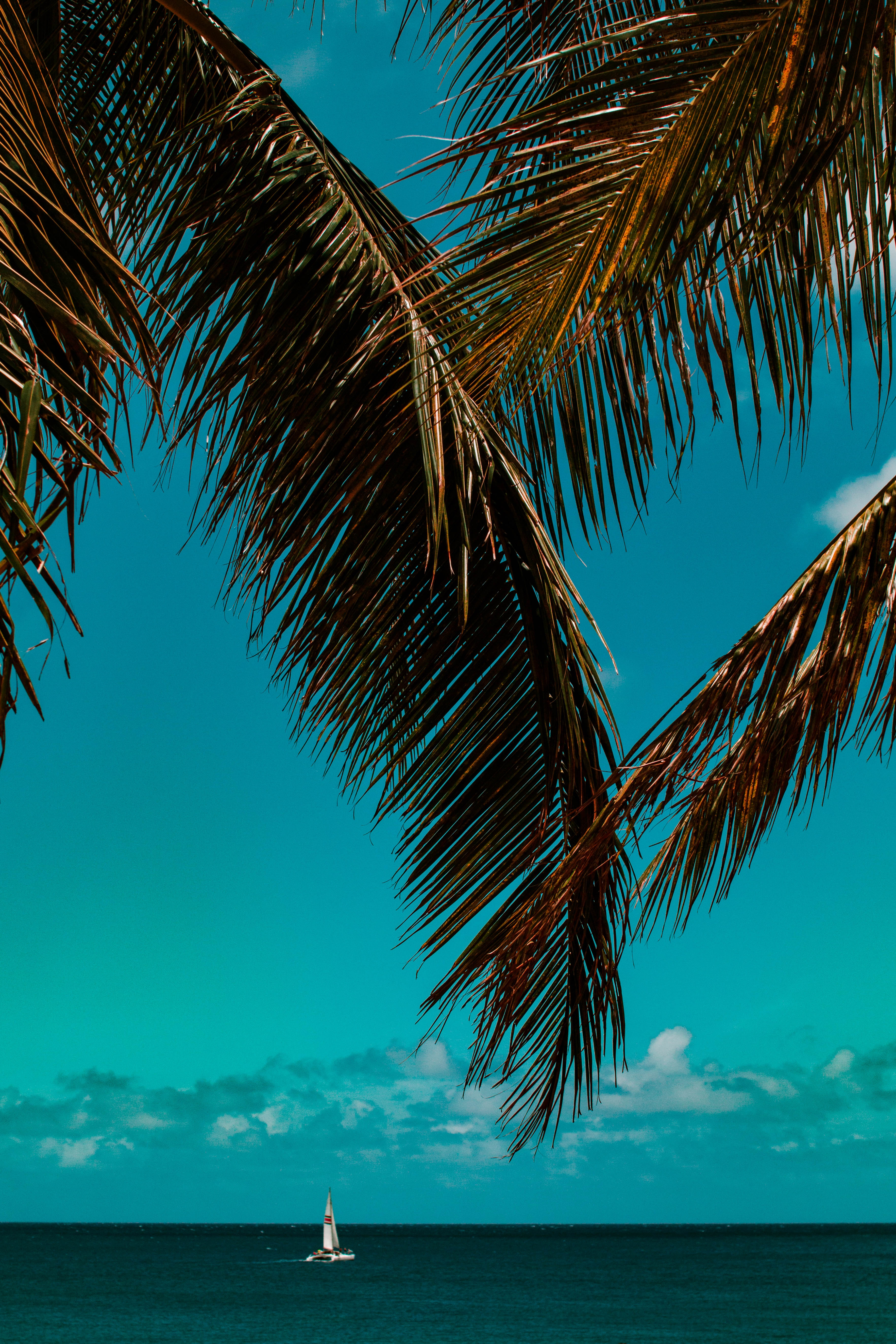 86701 download wallpaper Nature, Palm, Branches, Sea, Horizon screensavers and pictures for free
