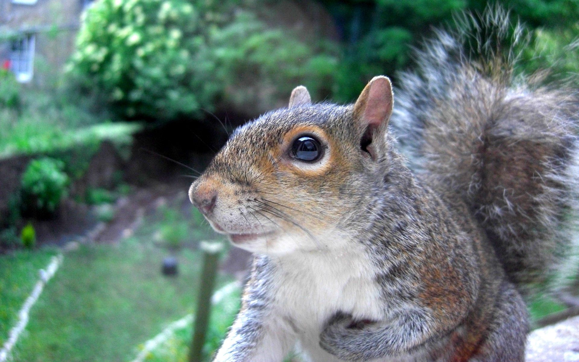 65432 Screensavers and Wallpapers Squirrel for phone. Download Animals, Squirrel, Muzzle, Sight, Opinion, Tail pictures for free