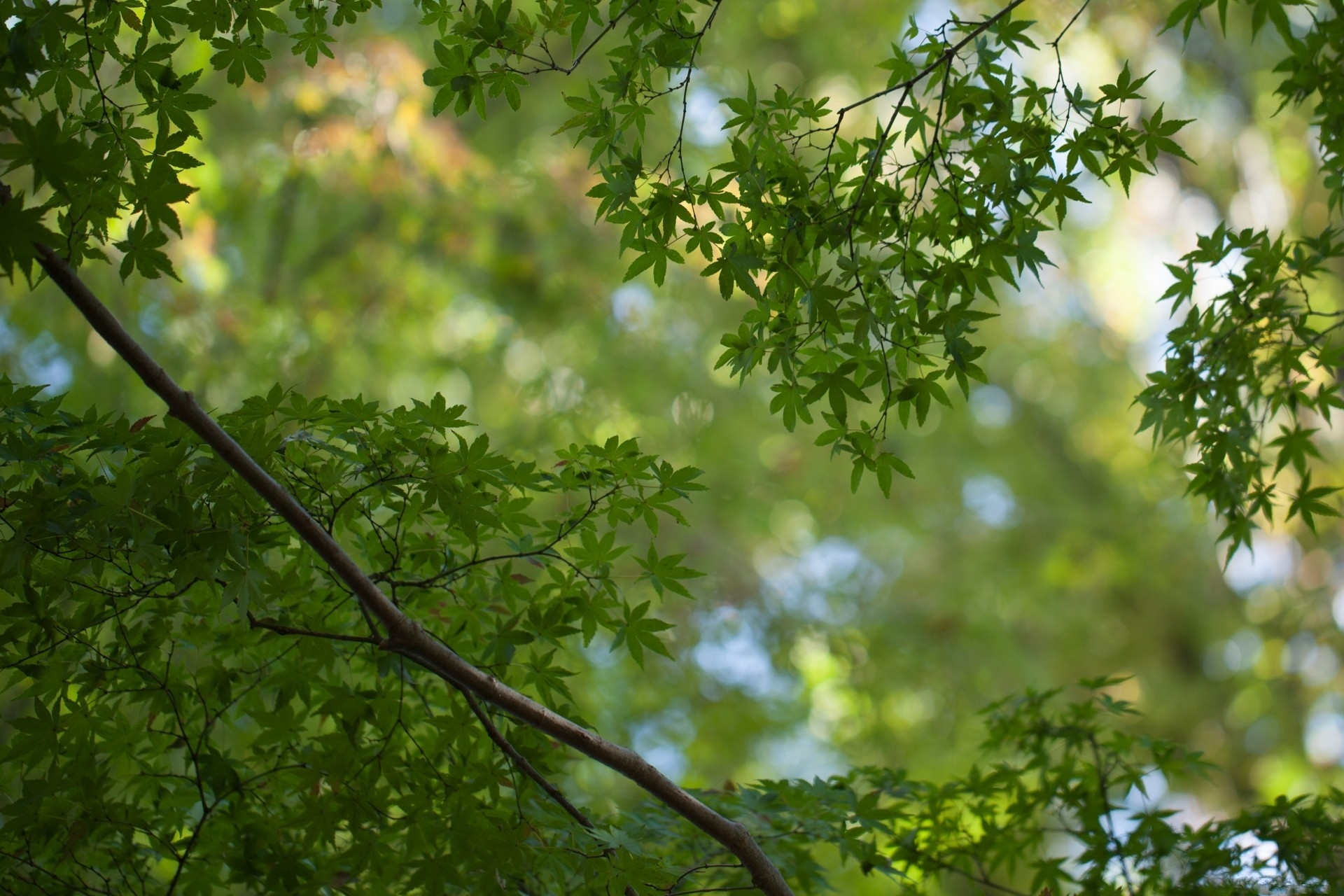 131942 download wallpaper Branches, Leaves, Nature screensavers and pictures for free