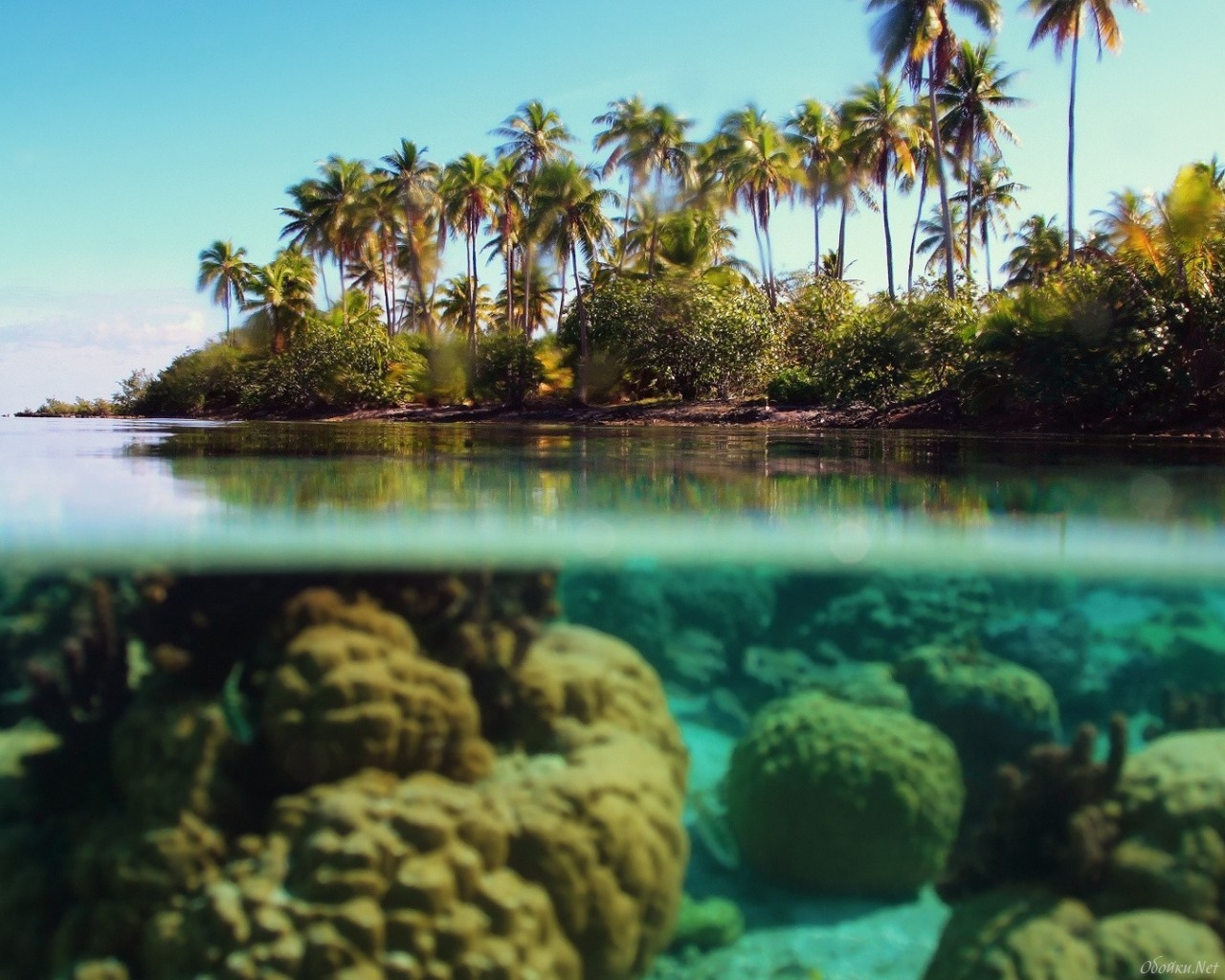20587 download wallpaper Landscape, Sea, Palms screensavers and pictures for free