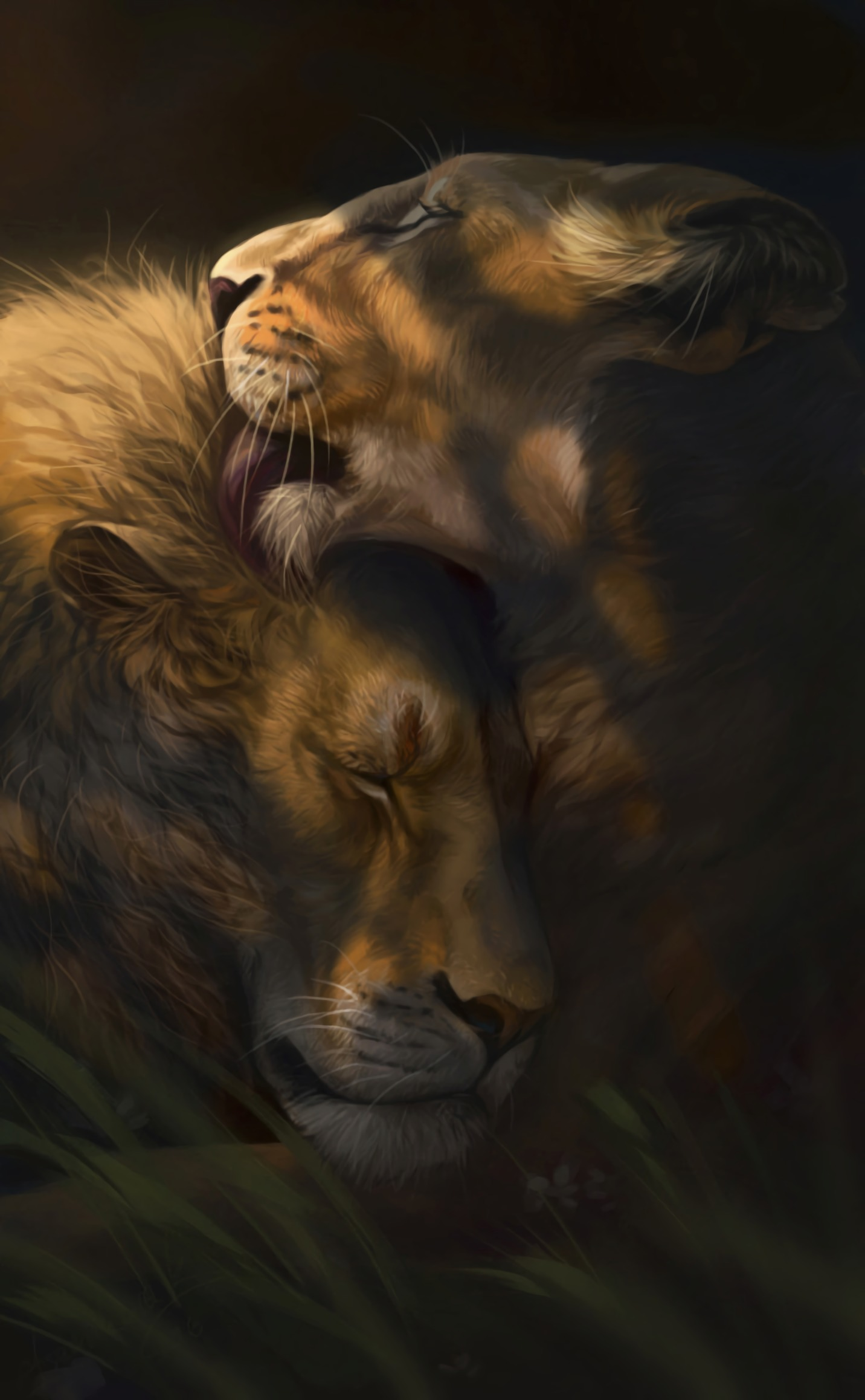 64338 download wallpaper Art, Lion, Lioness, Love, Nicely, Nice screensavers and pictures for free