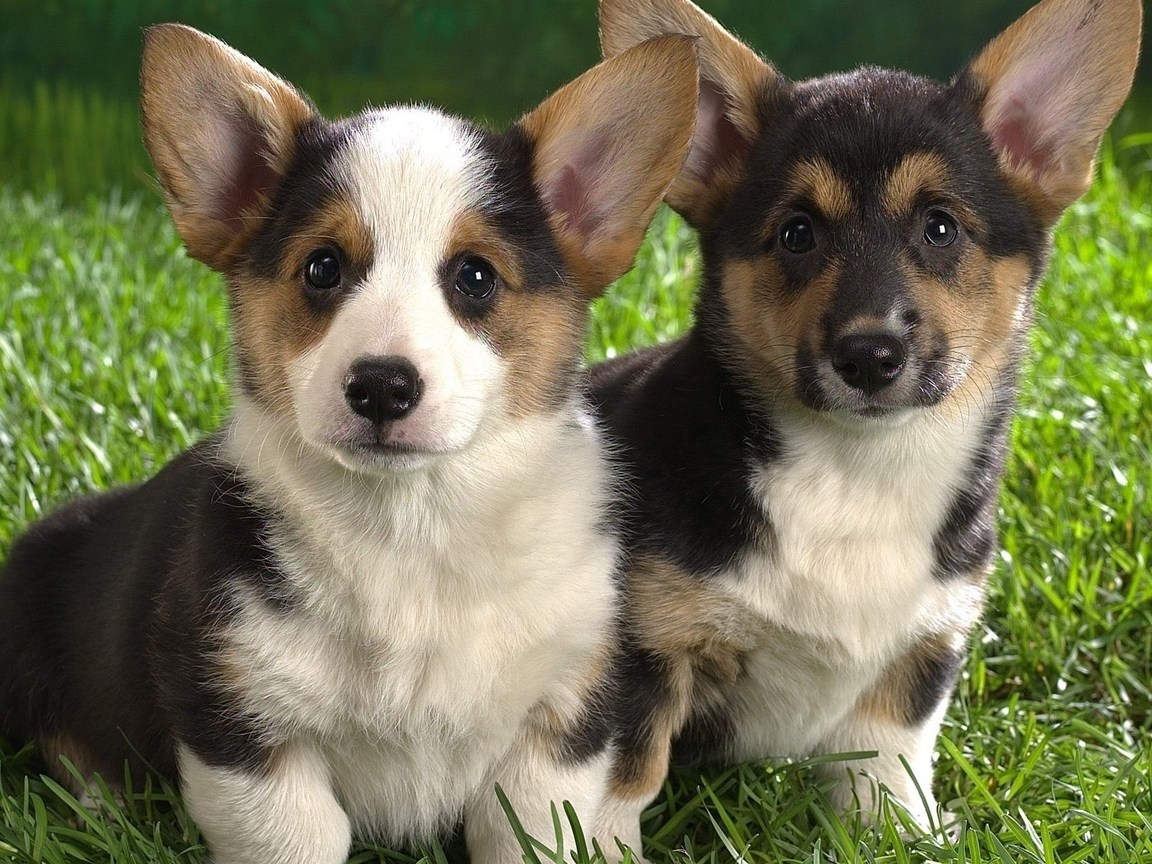3000 download wallpaper Animals, Dogs screensavers and pictures for free