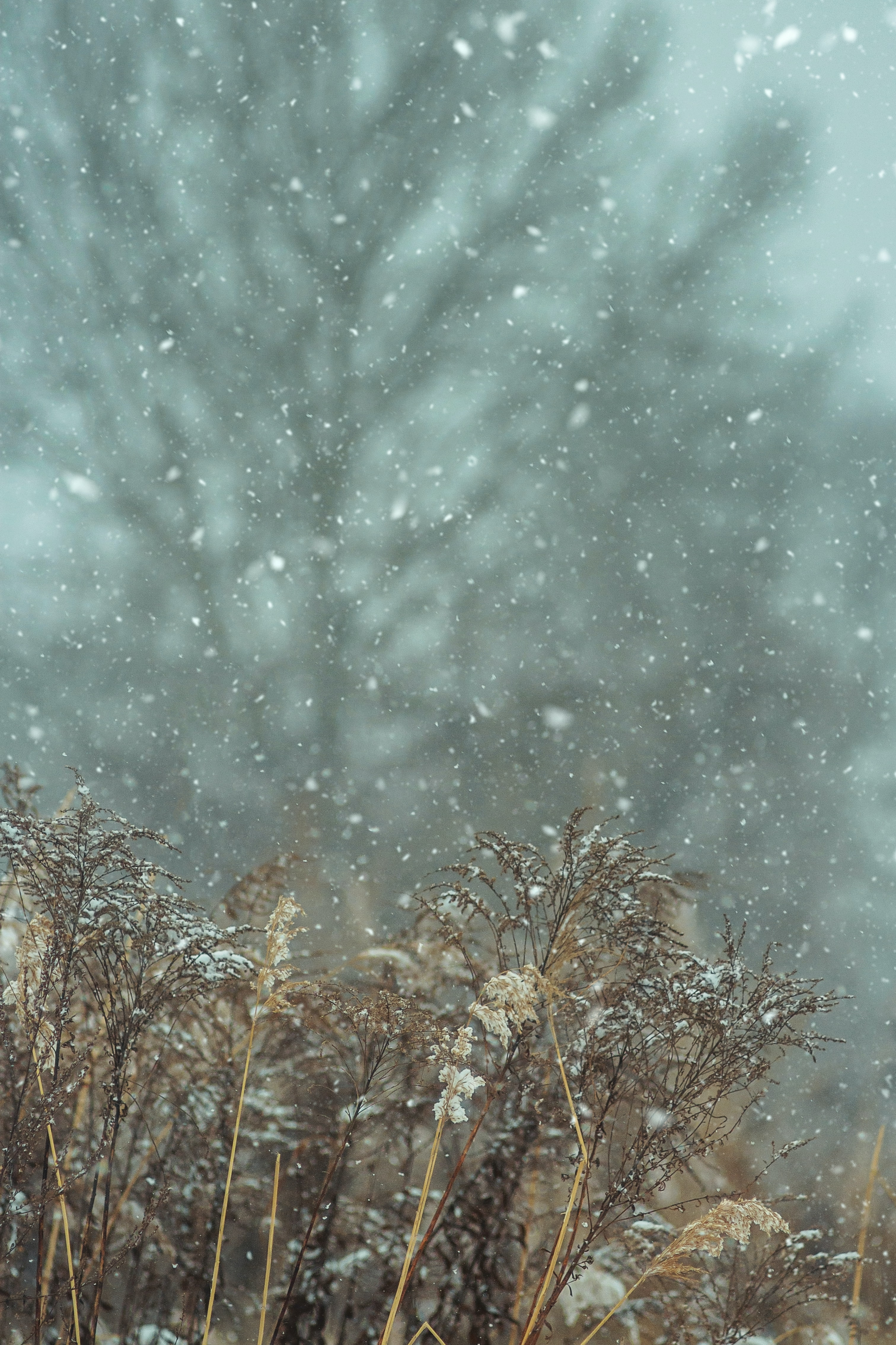 148502 download wallpaper Snow, Snowfall, Winter, Plants, Nature screensavers and pictures for free