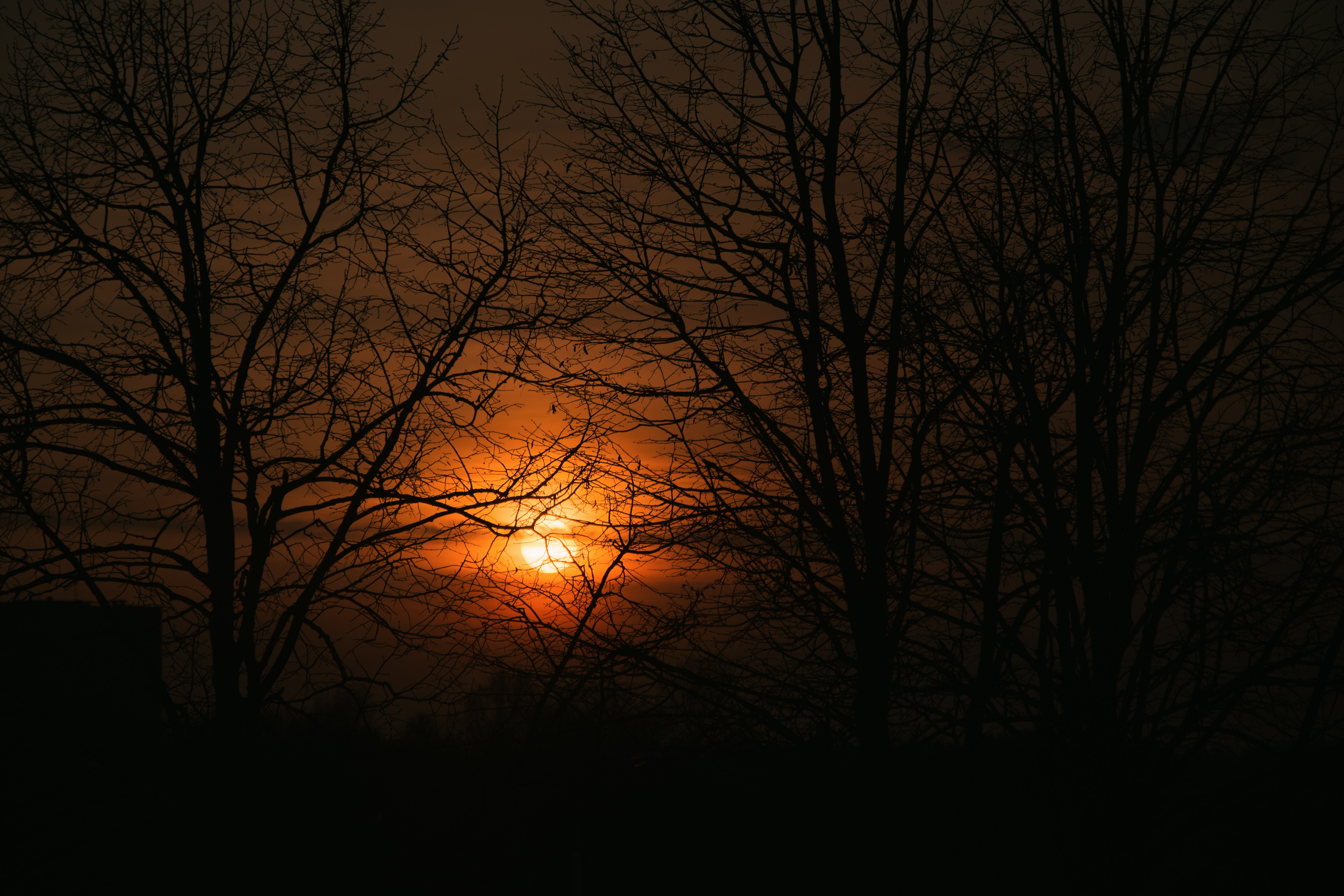 128545 download wallpaper Dark, Sunset, Branches, Trees, Sky, Sun screensavers and pictures for free