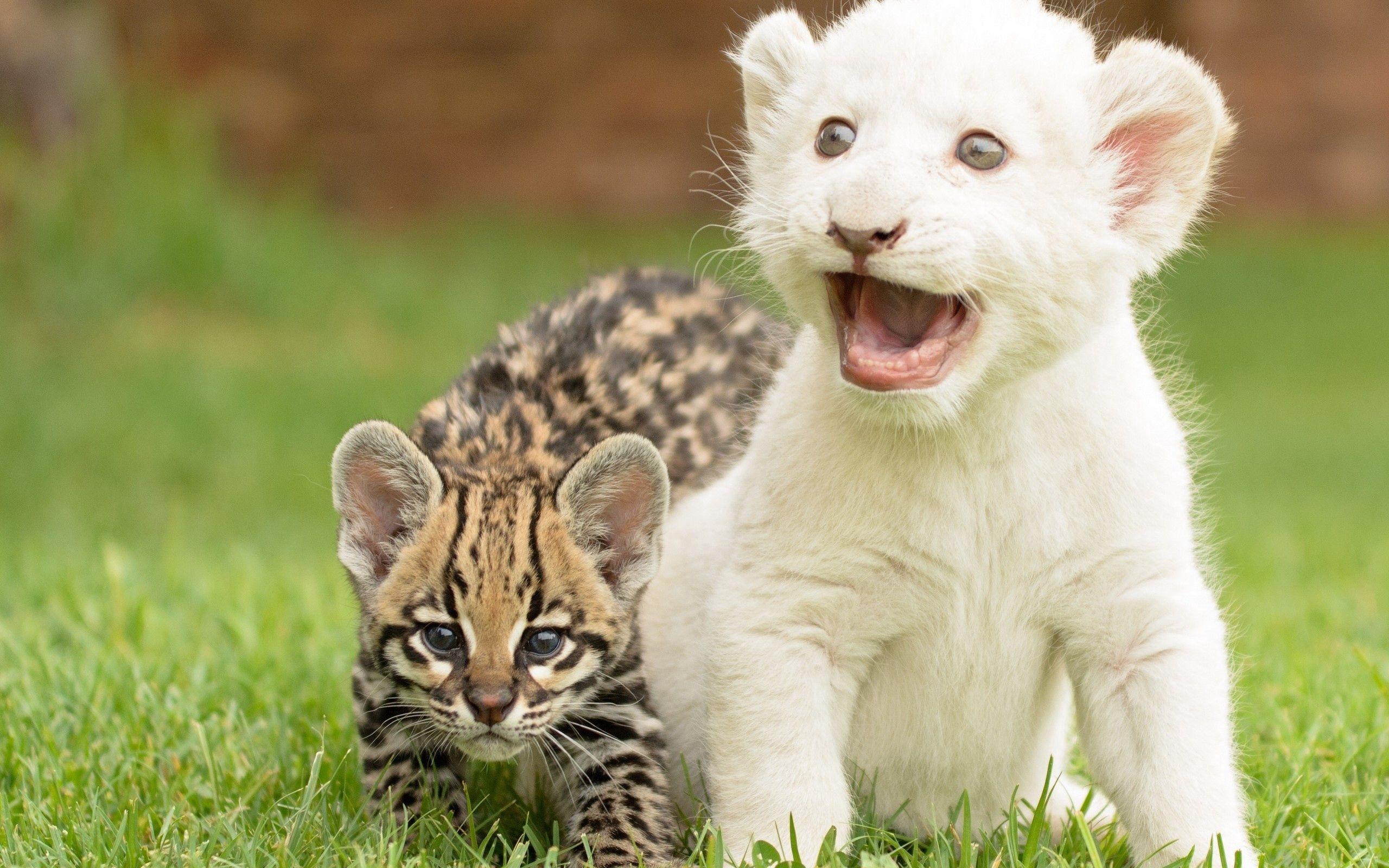 81948 скачать обои Животные, Тигренок, Большие Кошки, Детеныши, Трава - заставки и картинки бесплатно