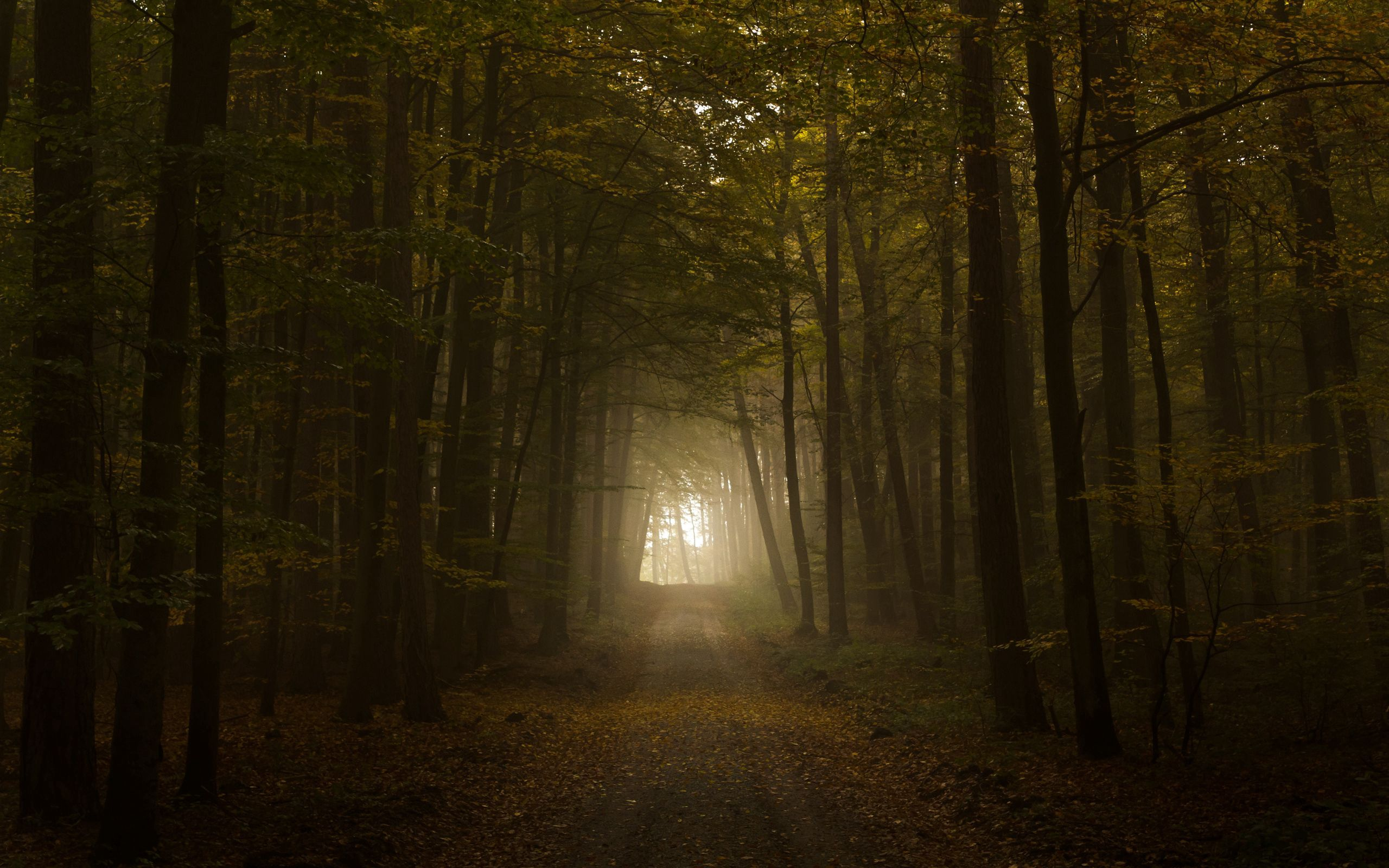 76499 download wallpaper Forest, Nature, Trees, Autumn, Shine, Light, Road, Fog screensavers and pictures for free