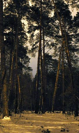 26413 скачать обои Пейзаж, Деревья - заставки и картинки бесплатно