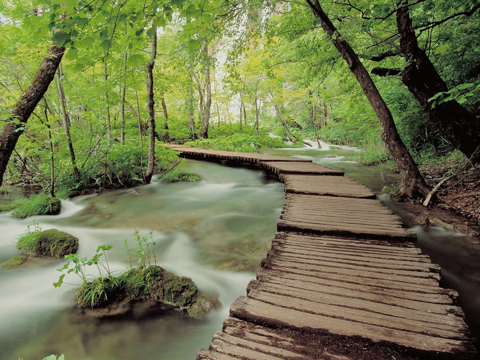 677 скачать обои Мосты, Пейзаж, Природа, Деревья, Река - заставки и картинки бесплатно