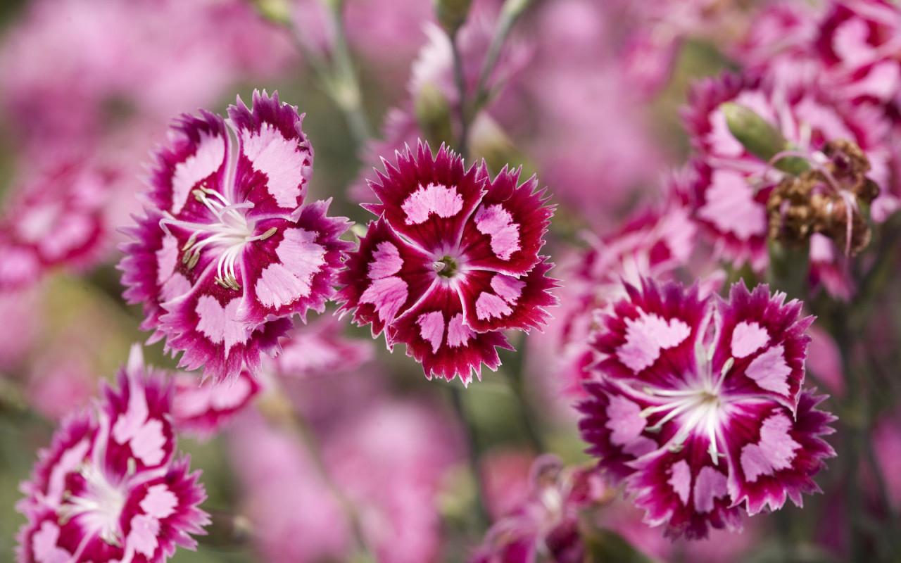 15040 descargar fondo de pantalla Plantas, Flores: protectores de pantalla e imágenes gratis