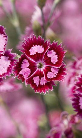 15040 скачать обои Растения, Цветы - заставки и картинки бесплатно
