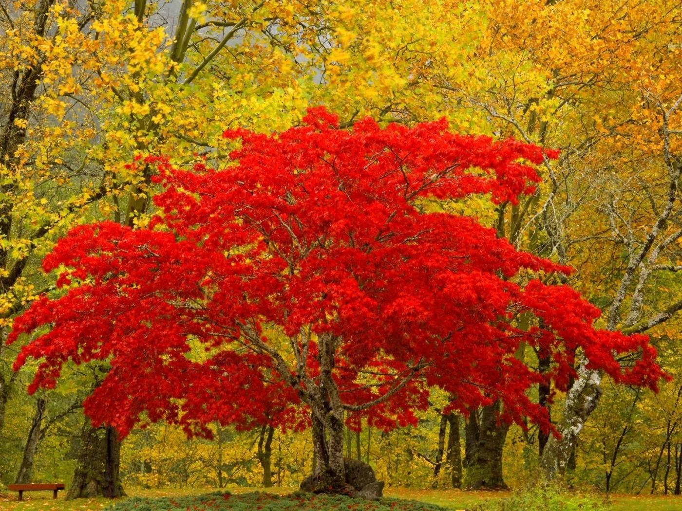 25056 скачать обои Пейзаж, Деревья, Осень - заставки и картинки бесплатно