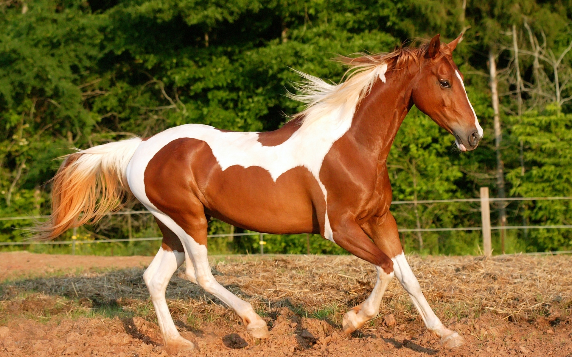 41756 download wallpaper Animals, Horses screensavers and pictures for free