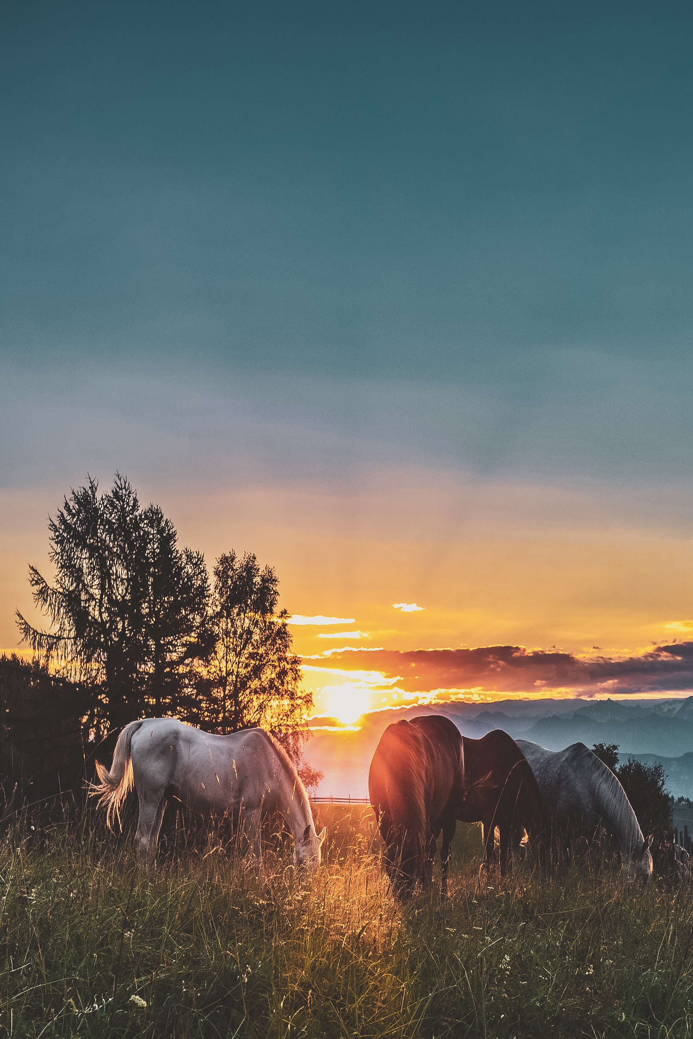 117546 download wallpaper Animals, Sunset, Horses, Stroll, Paddock screensavers and pictures for free