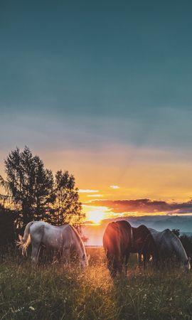 117546 baixar papel de parede Animais, Cavalos, Pôr Do Sol, Pomar, Pasto, Paddock, Passeio, Passear - protetores de tela e imagens gratuitamente