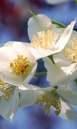 46927 baixar papel de parede Plantas, Flores - protetores de tela e imagens gratuitamente