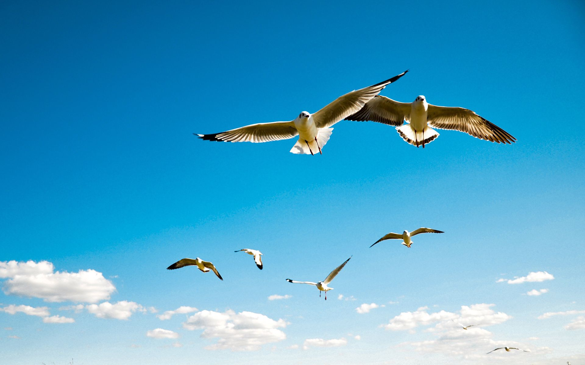 56126 download wallpaper Animals, Birds, Sky, Seagulls, Flight, Wings, Swing, Albatross screensavers and pictures for free