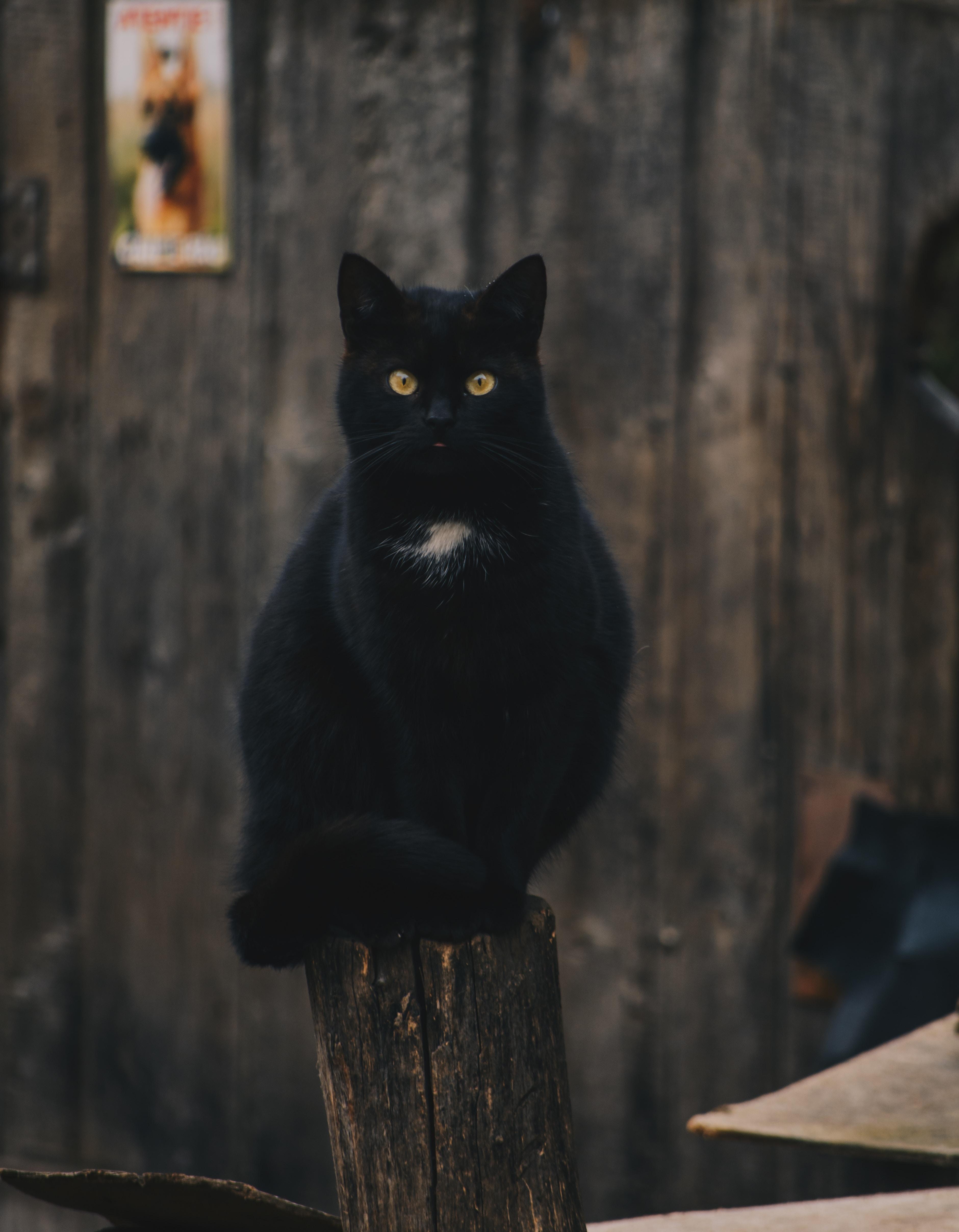 56131 скачать обои Животные, Кот, Черный, Сидит, Взгляд - заставки и картинки бесплатно