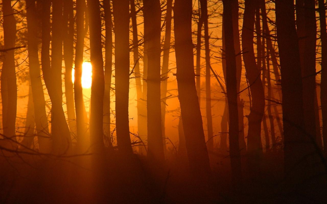 3591 скачать обои Пейзаж, Деревья, Закат, Солнце - заставки и картинки бесплатно
