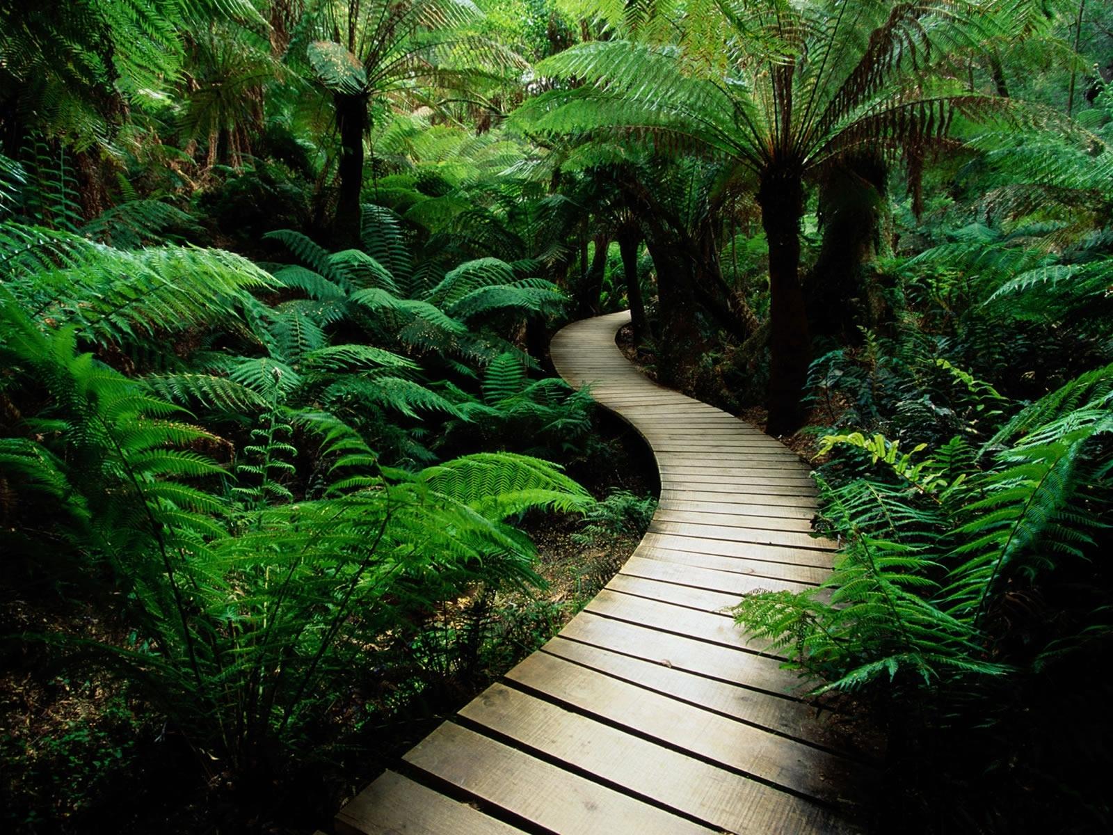 1123 Hintergrundbild herunterladen Pflanzen, Landschaft, Bäume, Roads, Palms - Bildschirmschoner und Bilder kostenlos