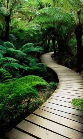 1123 Заставки и Обои Растения на телефон. Скачать Растения, Пейзаж, Деревья, Дороги, Пальмы картинки бесплатно