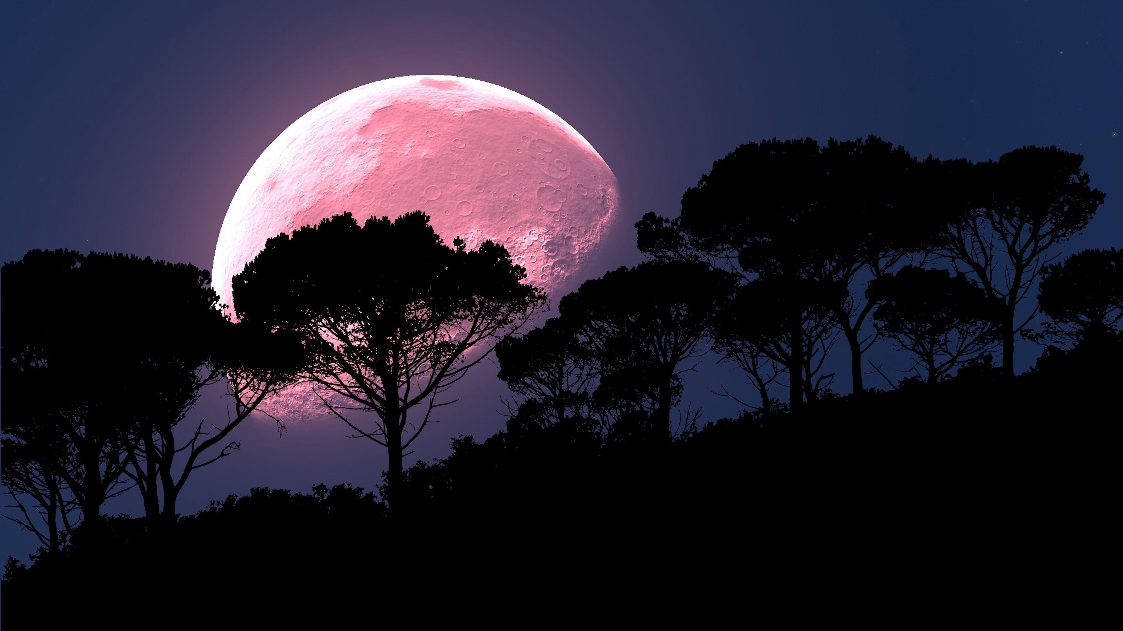 90928 скачать обои Темные, Луна, Дерево, Фотошоп, Ночь, Полнолуние, Планета - заставки и картинки бесплатно