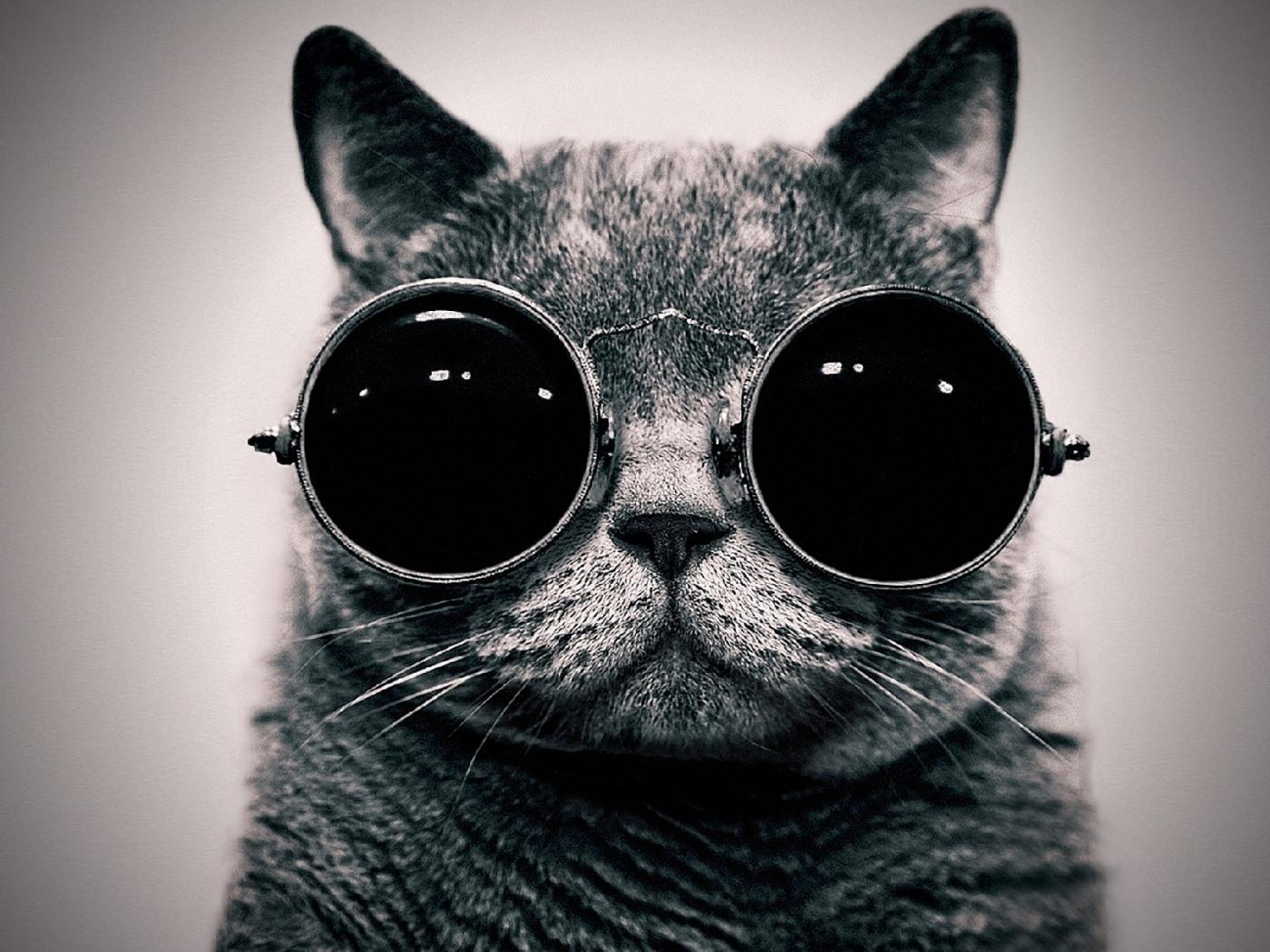 Handy-Wallpaper Tiere, Katzen kostenlos herunterladen.