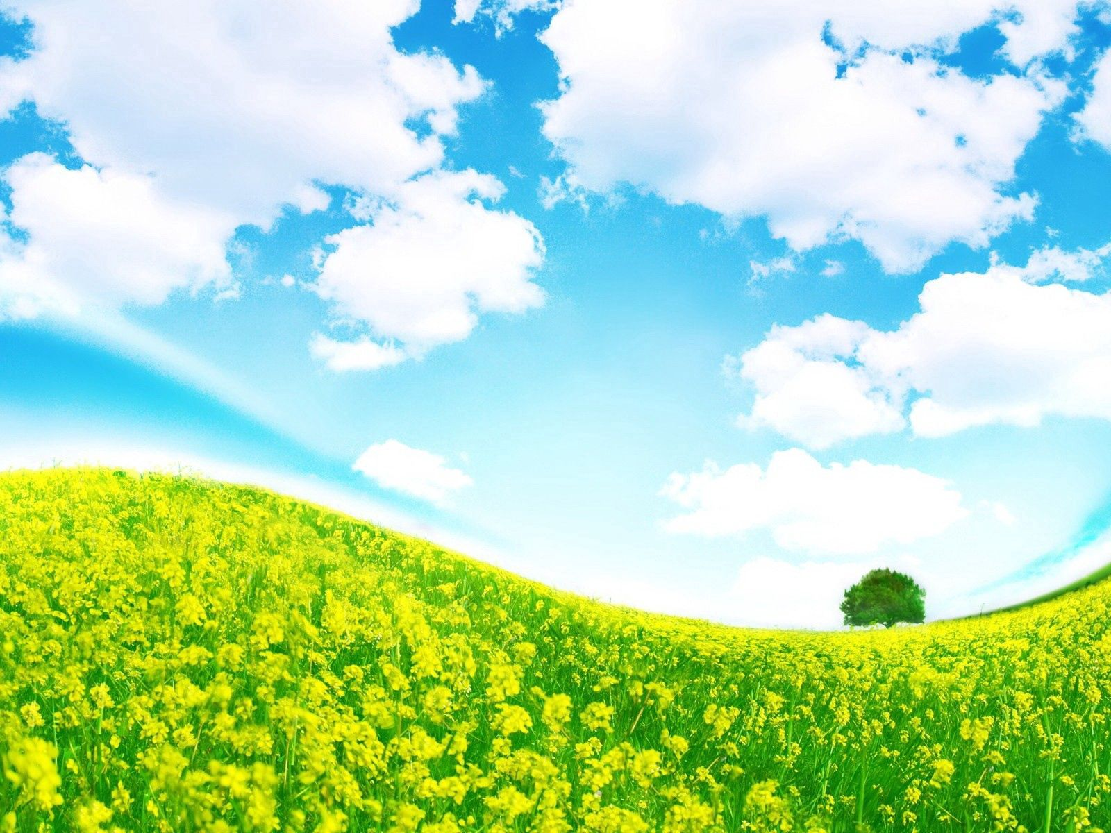 140885 download wallpaper Nature, Meadow, Slope, Wood, Tree, Colors, Color, Flowers screensavers and pictures for free
