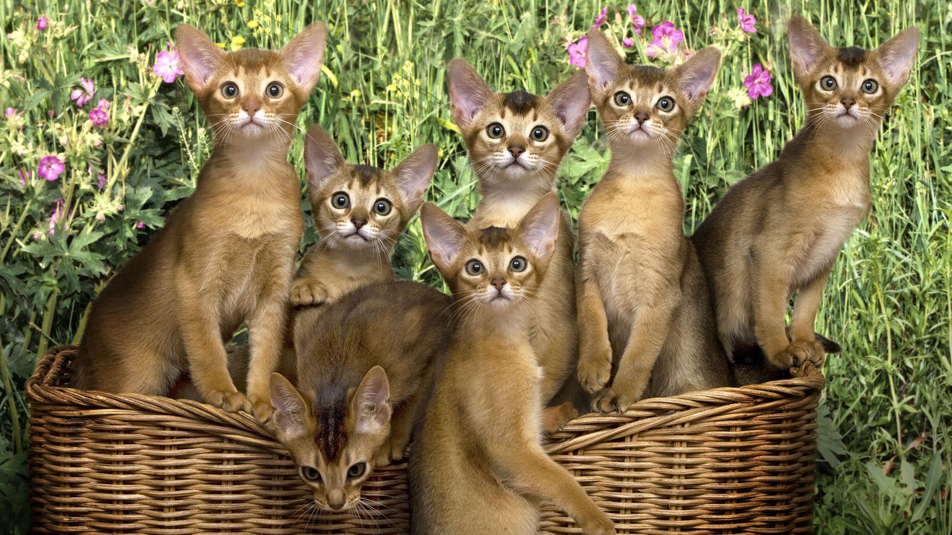 88881 Screensavers and Wallpapers Kittens for phone. Download Animals, Flowers, Basket, Kittens, Lots Of, Multitude pictures for free