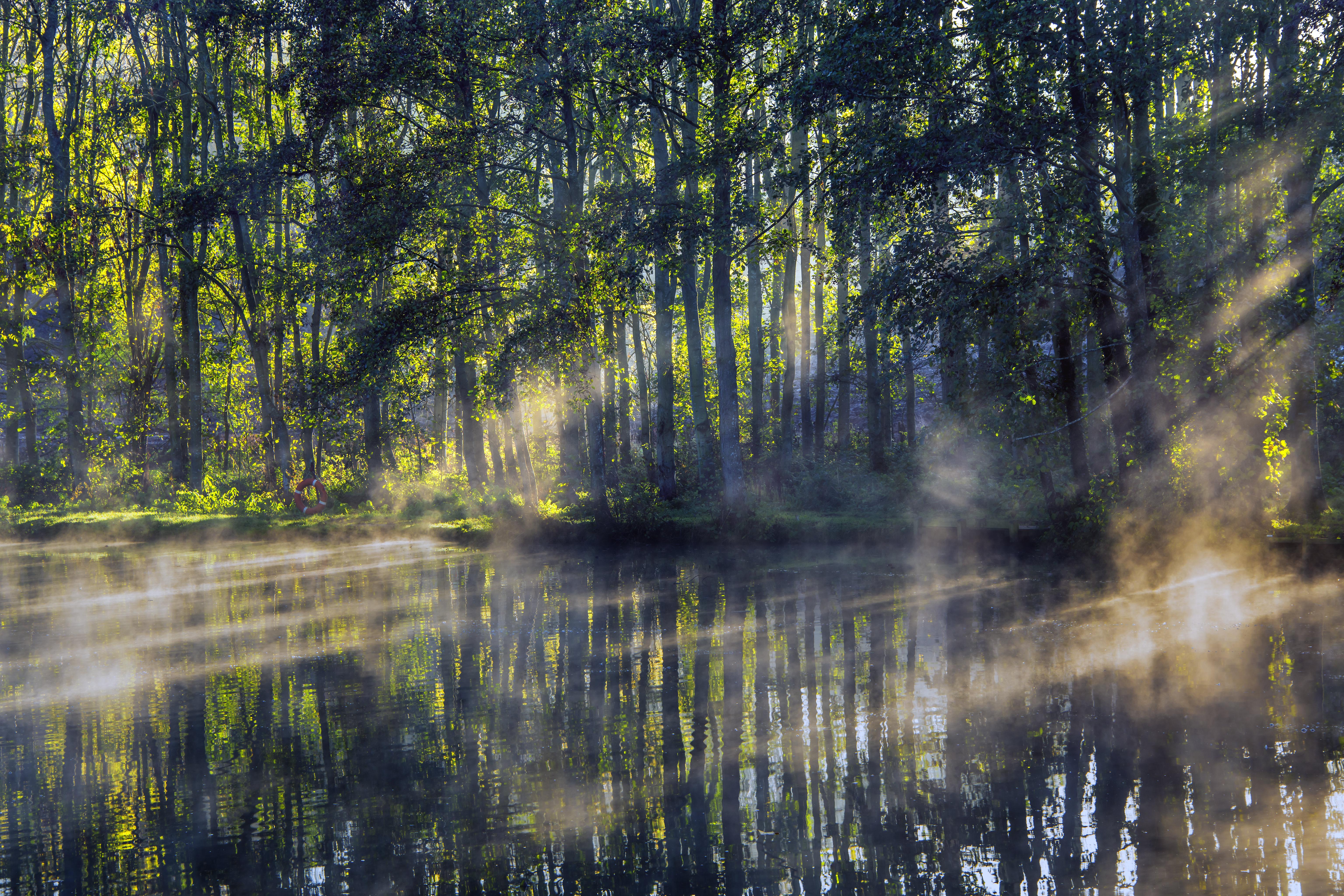 77666 fondo de pantalla 1920x1080 en tu teléfono gratis, descarga imágenes Árboles, Lago, Vigas, Rayos, Niebla, Naturaleza, Sol 1920x1080 en tu móvil