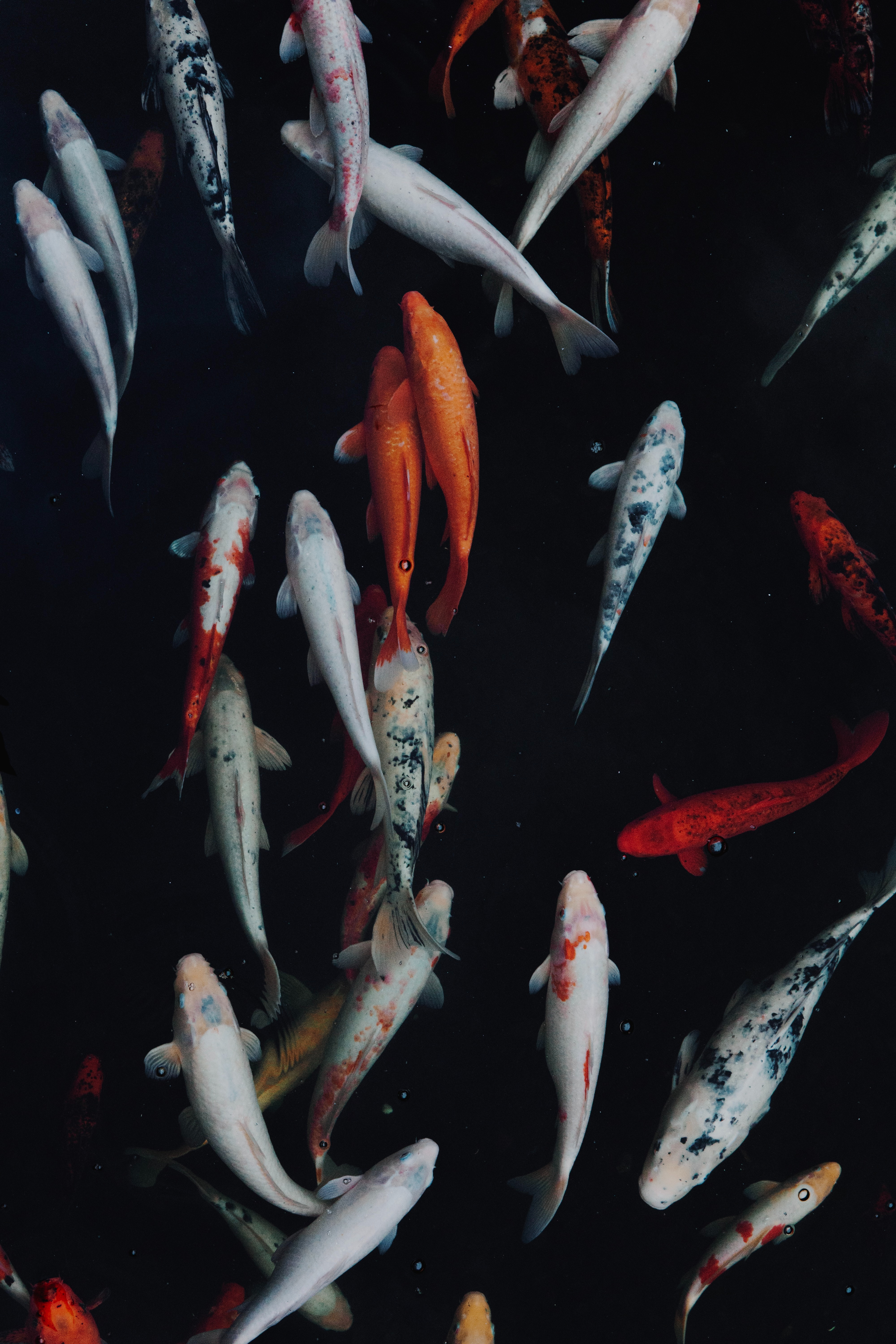 95556 download wallpaper Animals, Swimming, Underwater World, Multicolored, Motley, Fishes screensavers and pictures for free