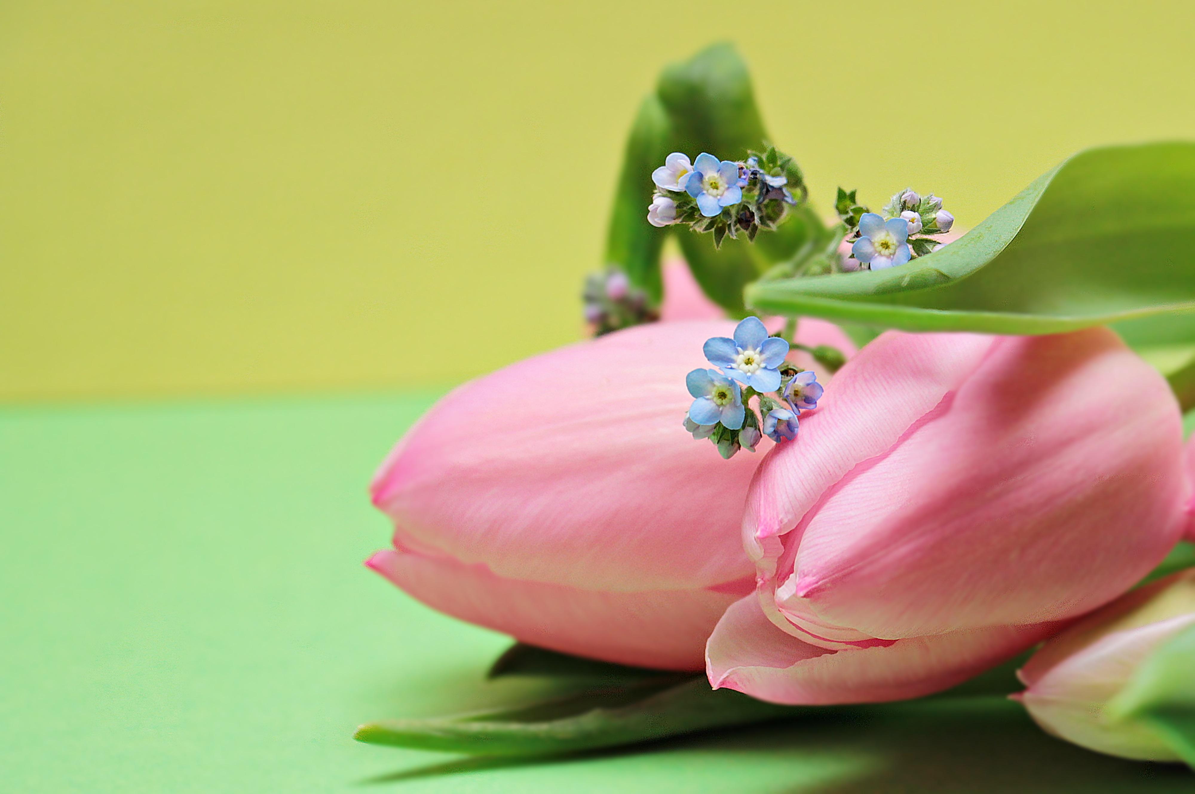 87541 descargar fondo de pantalla Flores, Ramo, Rosa, Rosado, Tulipanes: protectores de pantalla e imágenes gratis