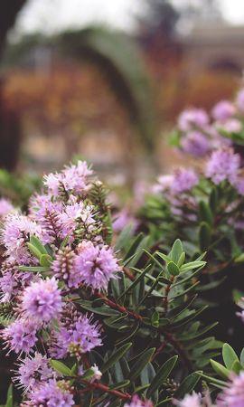 153925 descargar fondo de pantalla Flores, Plantas, Espinas, Lila: protectores de pantalla e imágenes gratis