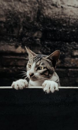 86540 Screensavers and Wallpapers Funny for phone. Download Animals, Cat, Sight, Opinion, Peep, Funny, Pet pictures for free
