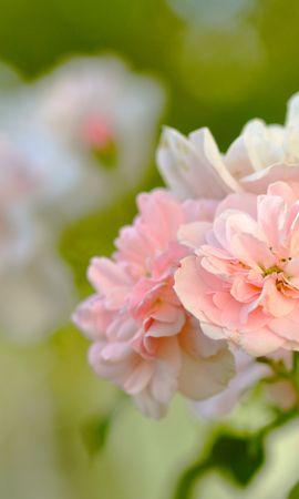 26465 скачать обои Растения, Цветы - заставки и картинки бесплатно