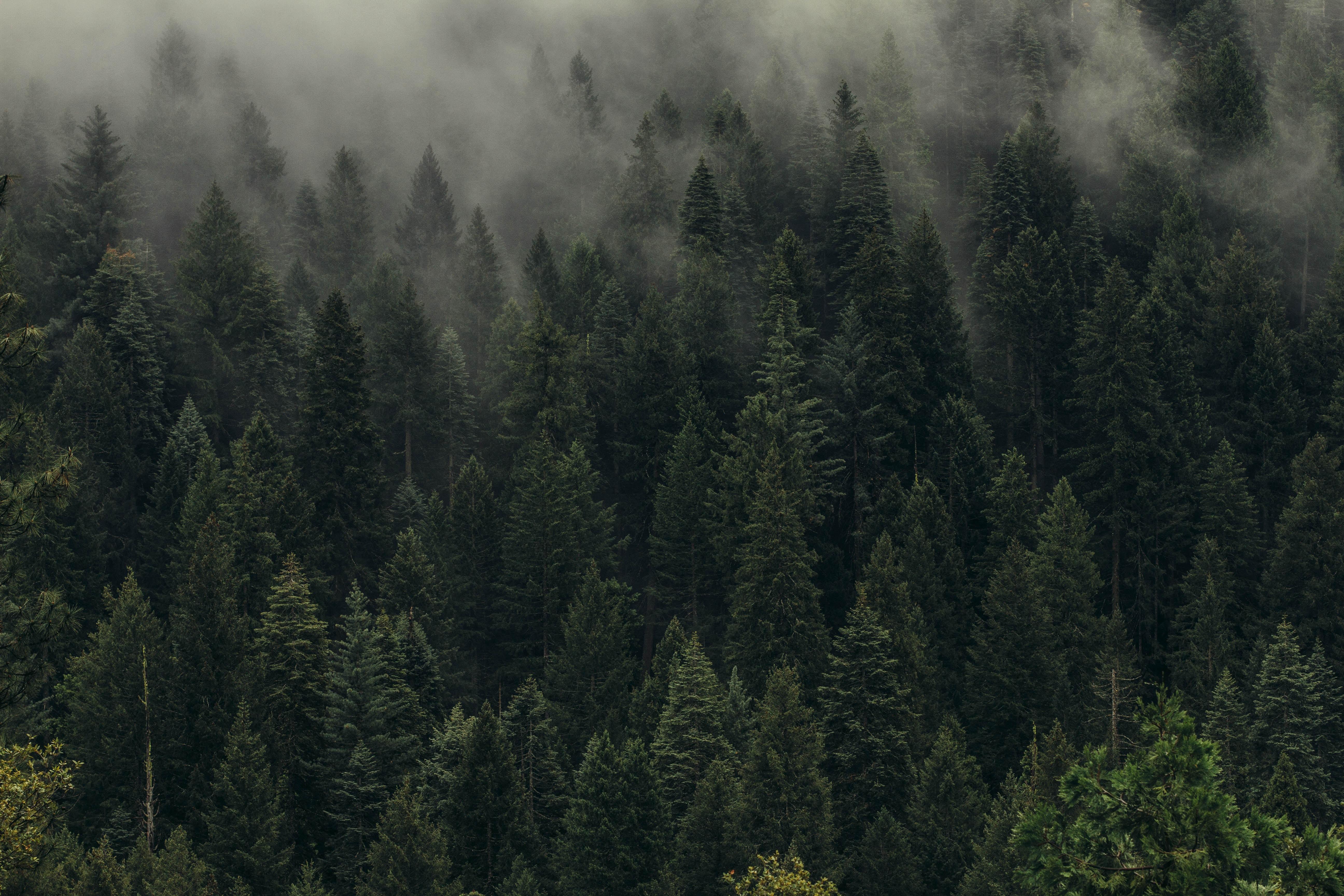 72011 скачать обои Лес, Деревья, Зеленый, Природа, Вид Сверху, Туман, Пелена - заставки и картинки бесплатно