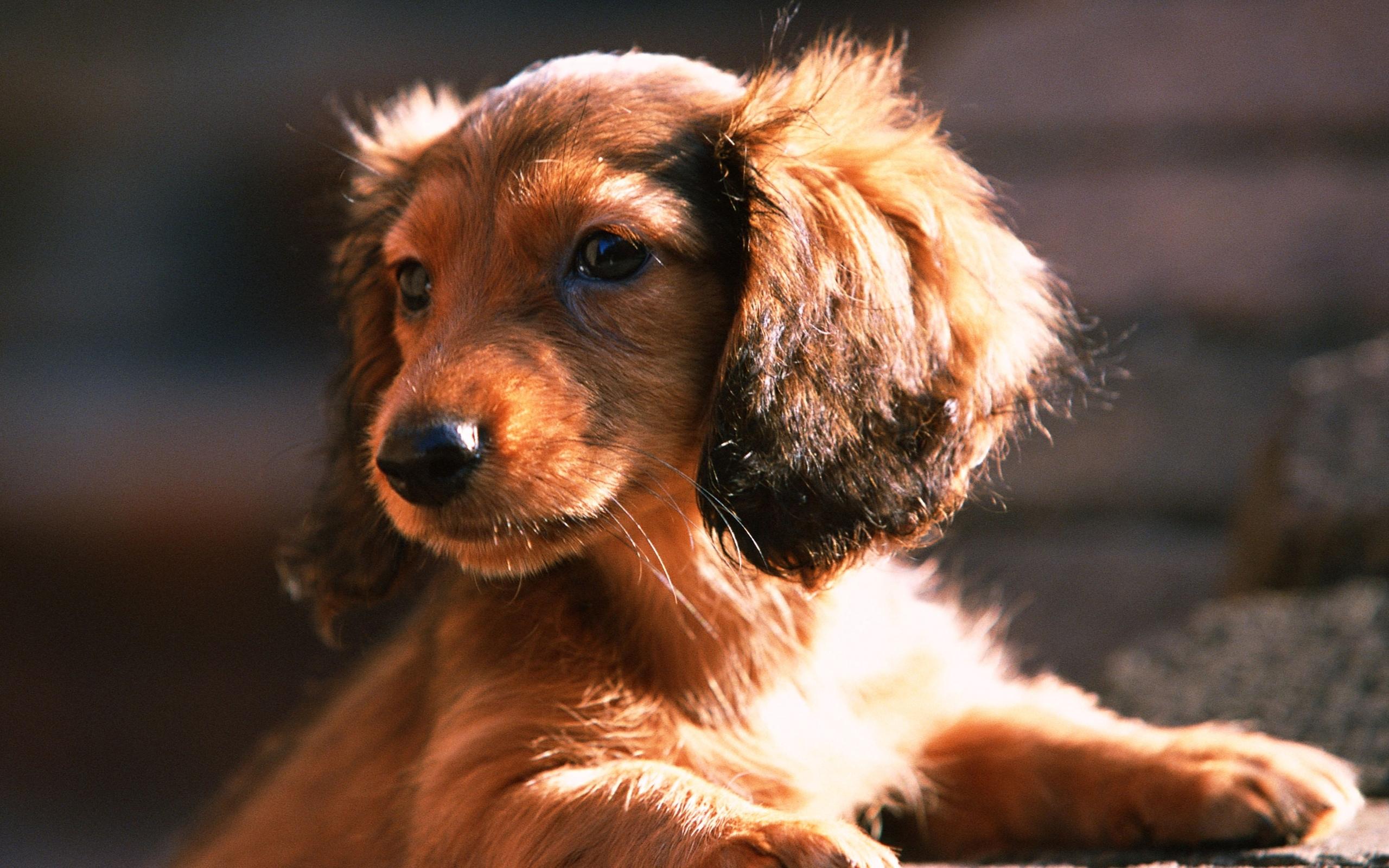 Baixar papel de parede para celular de Cães, Animais gratuito.