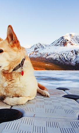 46273 baixar papel de parede Animais, Paisagem, Cães, Montanhas - protetores de tela e imagens gratuitamente