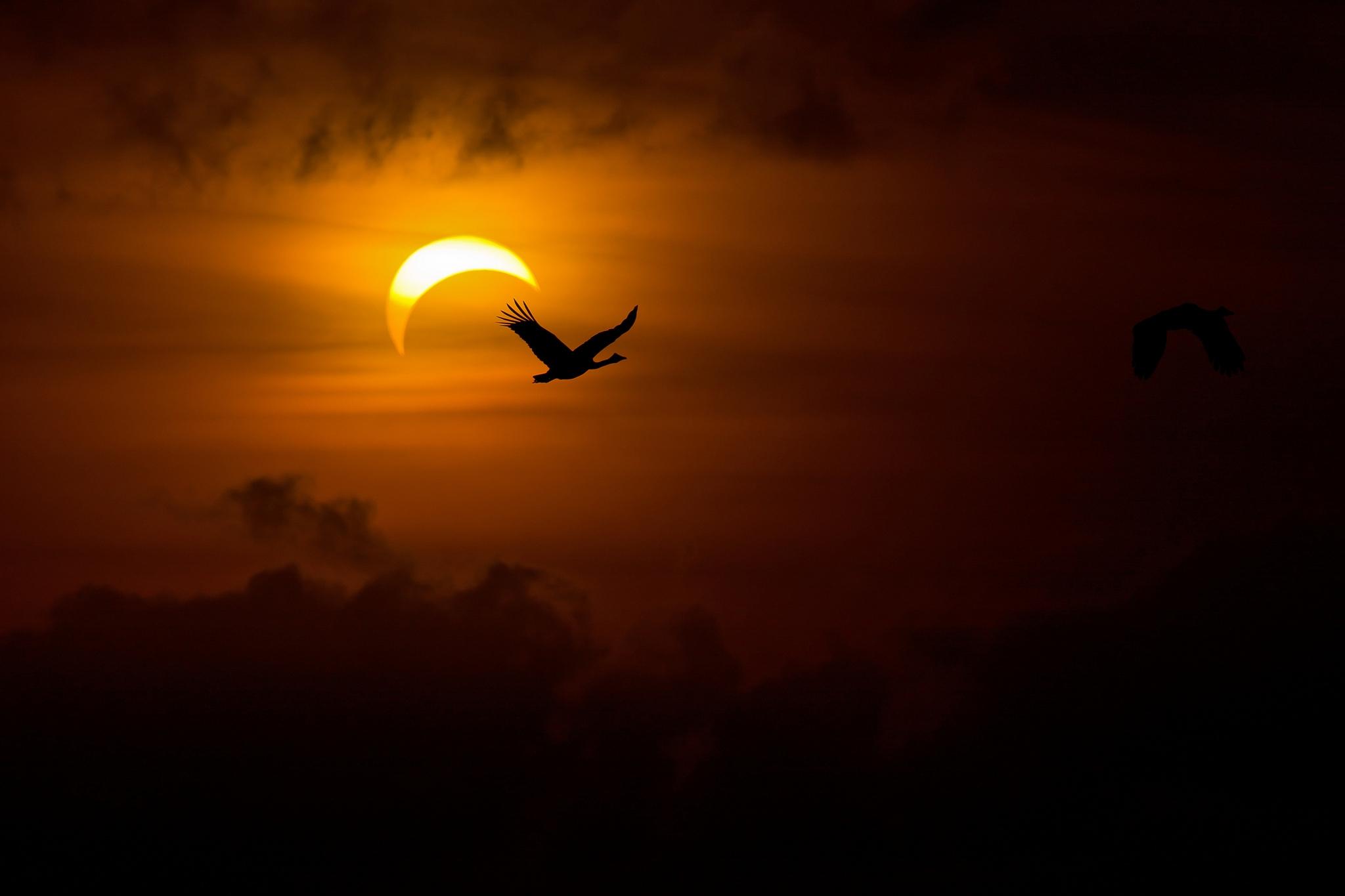 147036 Hintergrundbild herunterladen Geese, Vögel, Sun, Swans, Dunkel, Scheinen, Licht, Dunkelheit, Abend - Bildschirmschoner und Bilder kostenlos