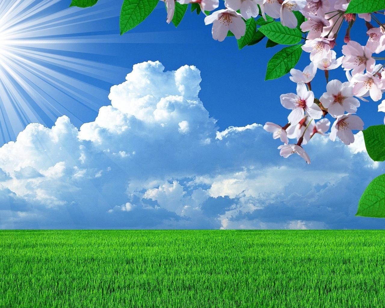 18033 скачать обои Пейзаж, Поля, Цветы, Трава, Небо, Облака - заставки и картинки бесплатно