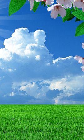 18033 Заставки и Обои Поля на телефон. Скачать Пейзаж, Цветы, Трава, Поля, Небо, Облака картинки бесплатно