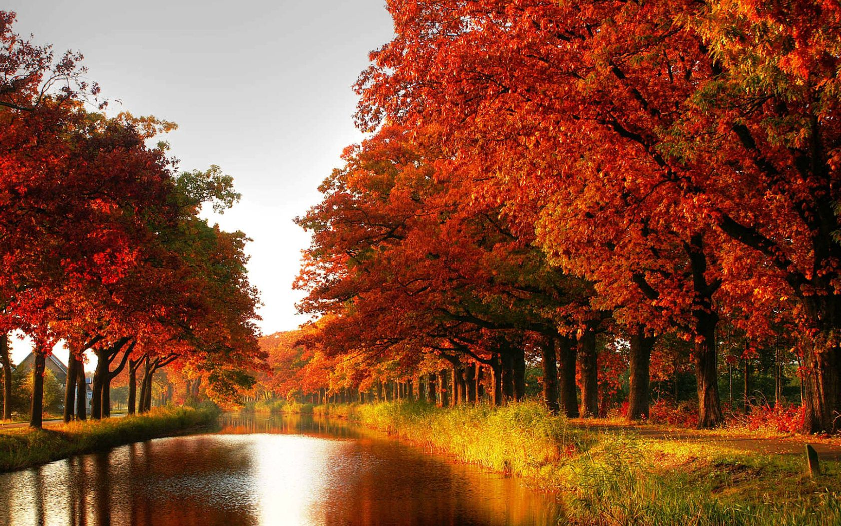 109341 download wallpaper Nature, Forest, Trees, Channel, Autumn screensavers and pictures for free