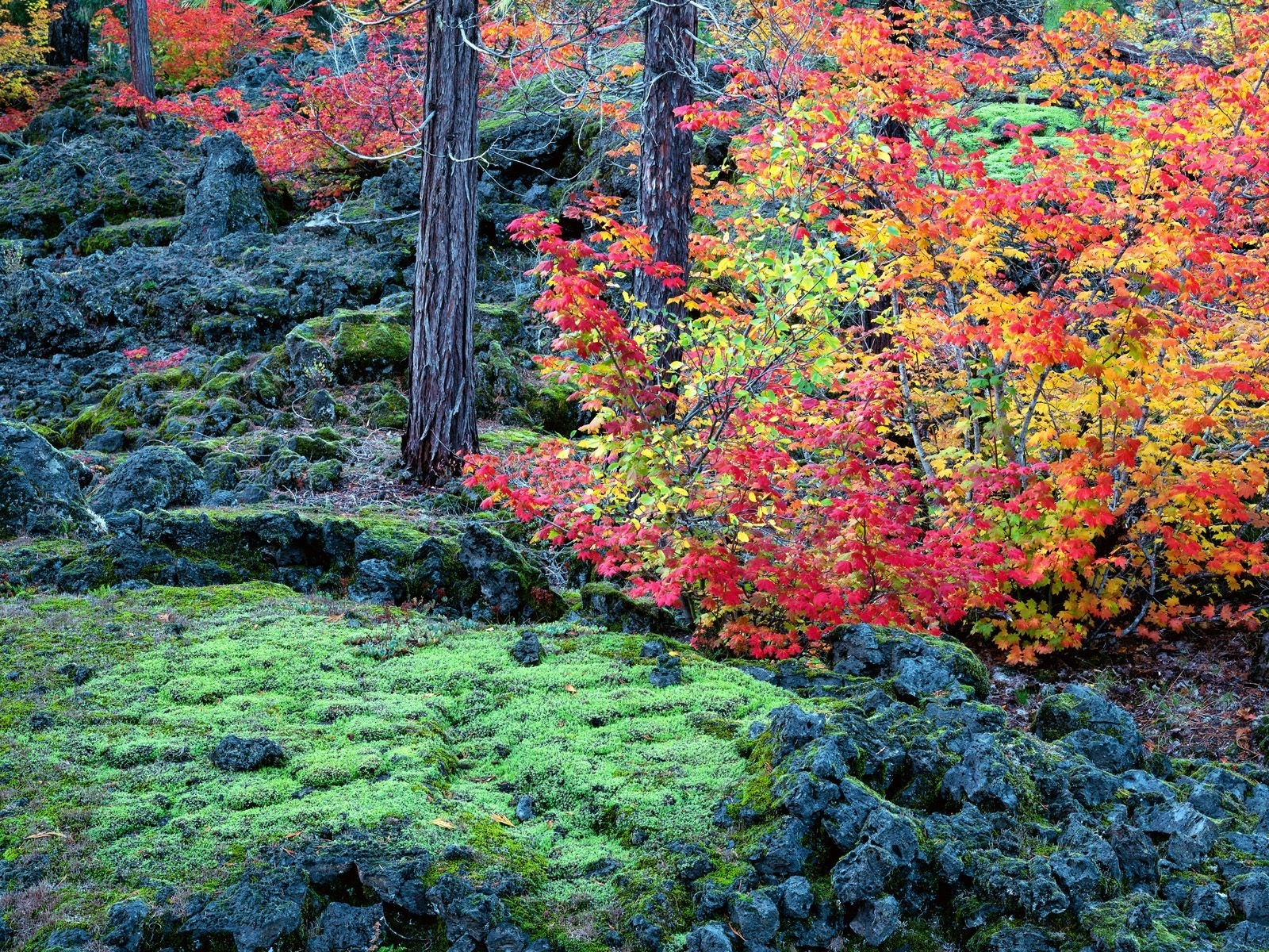 934 download wallpaper Landscape, Trees, Autumn screensavers and pictures for free
