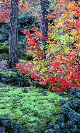 934 скачать обои Пейзаж, Деревья, Осень - заставки и картинки бесплатно