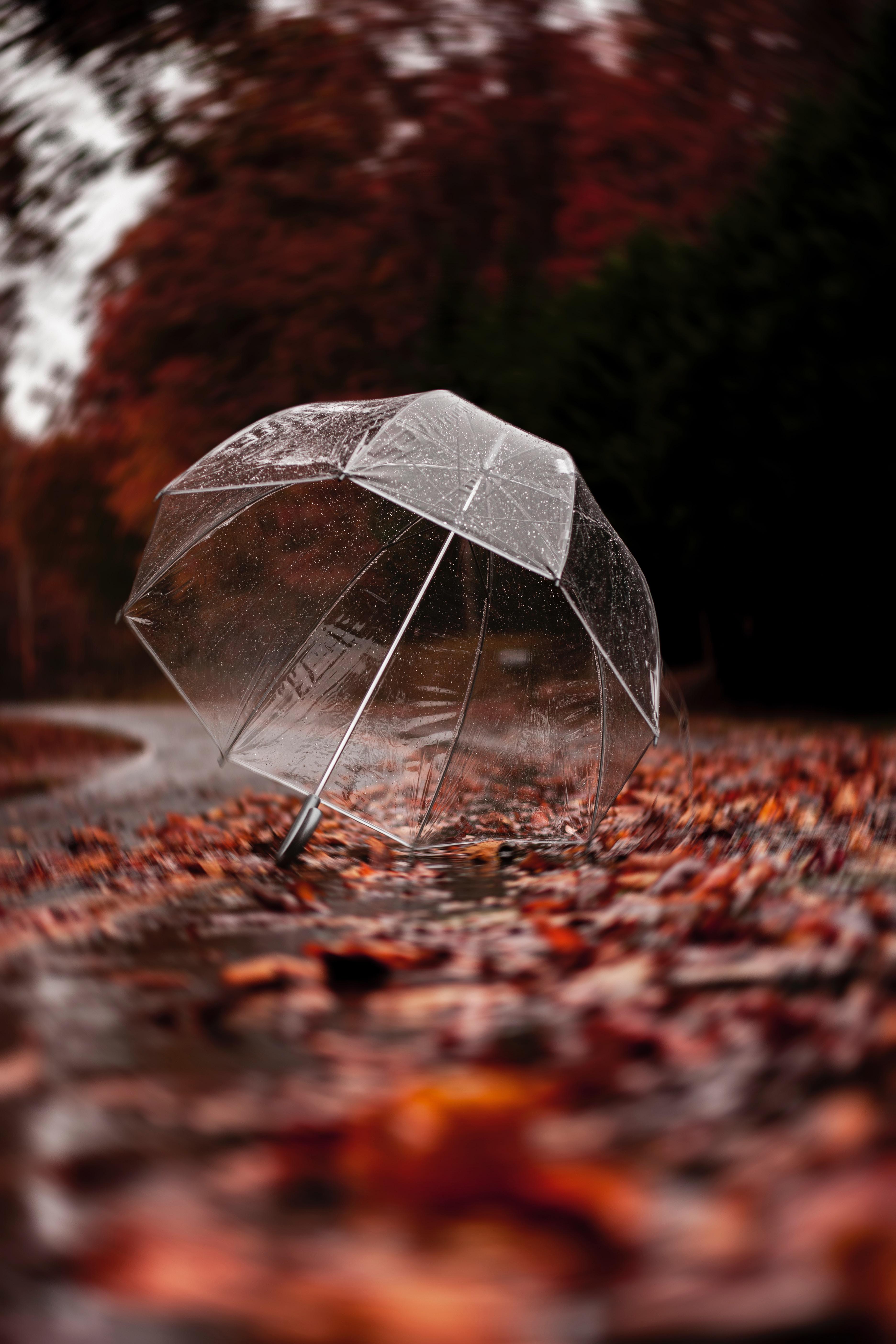 58270 Заставки и Обои Осень на телефон. Скачать Осень, Разное, Листва, Дождь, Зонт картинки бесплатно