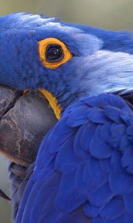 48170 baixar papel de parede Animais, Aves, Papagaios - protetores de tela e imagens gratuitamente