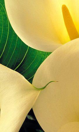 41593 descargar fondo de pantalla Plantas, Flores: protectores de pantalla e imágenes gratis