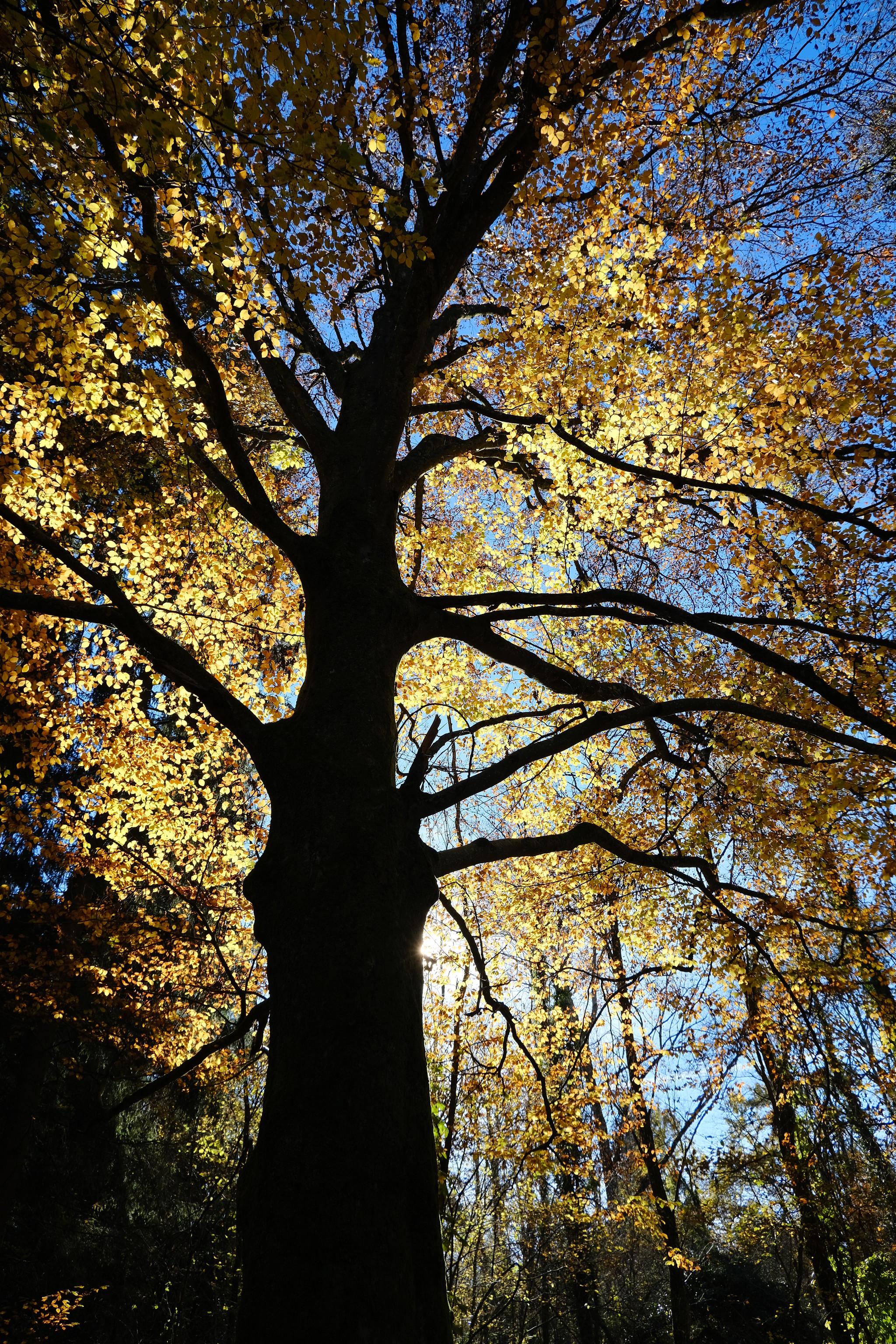 144361 Hintergrundbild 540x960 kostenlos auf deinem Handy, lade Bilder Natur, Blätter, Scheinen, Licht, Silhouette, Holz, Baum, Geäst, Zweige 540x960 auf dein Handy herunter